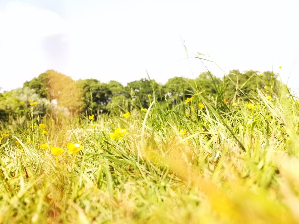 Grass, Field, Meadow, Grassy, Grasses, Grassy Field