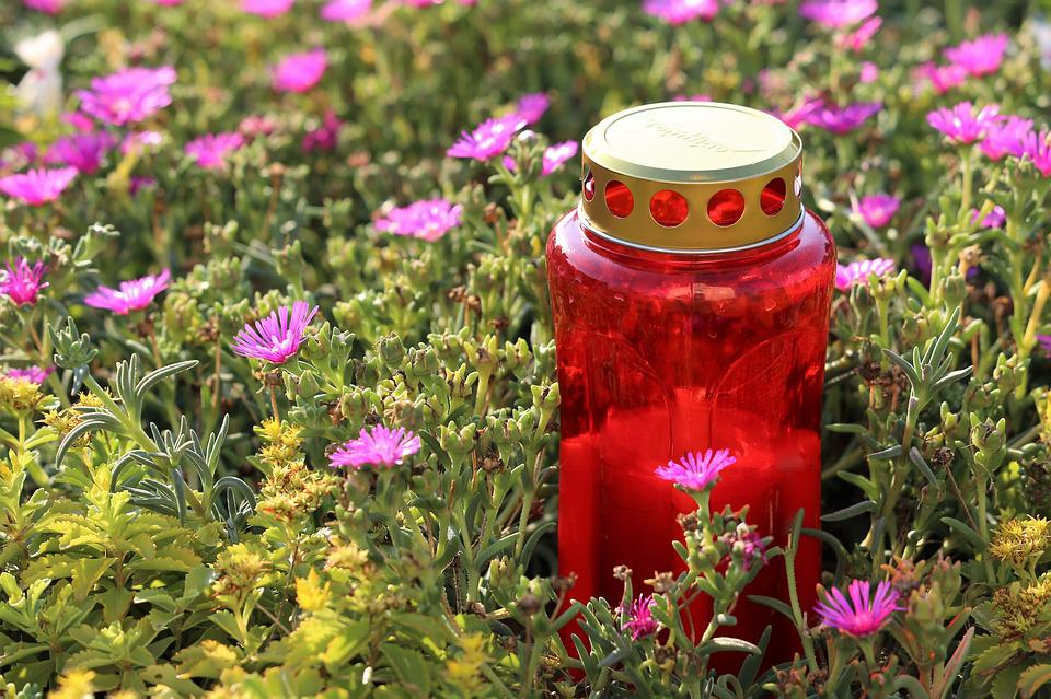 Red Candle, Flower, Aster Novae Angliae, Grave, Humble