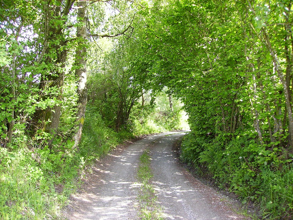 Lane, Tree, Green, Gravel Road, Away, Forest Path