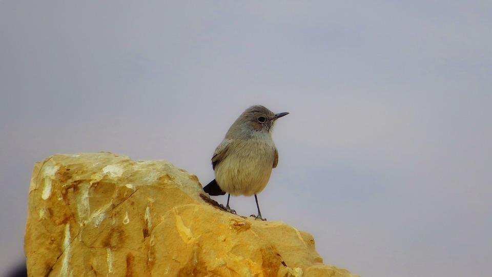 Bird, Gray, Israel, Martha Large, Beauty, Natural