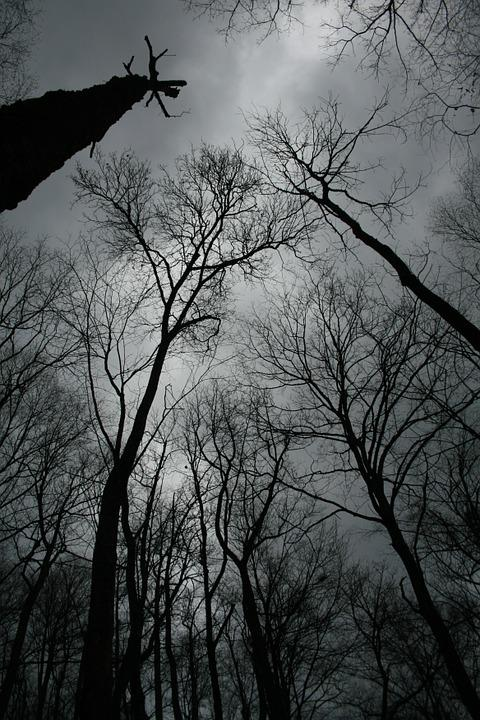 Trees, Winter, Black, Gray, Forest, Cold, Nature, Dark