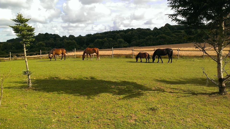 Horses, Field, Pastures, Grazing, Graze, Paddock, Farm