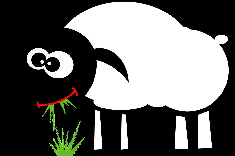 Sheep, Eat, Grass, Graze, Grazing, Lamb