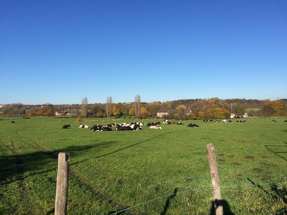 Cows, Landscape, Summer, Nature, Animal, Graze