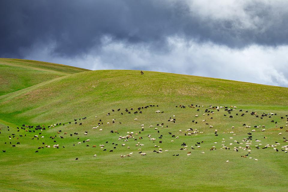 Landscape, Hilly, Grazing, Sheep, Goat