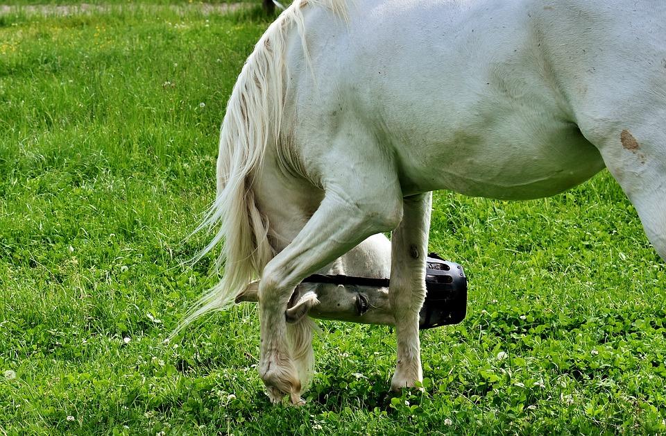 Mold, Horse, Pasture, Animal, Coupling, Grazing