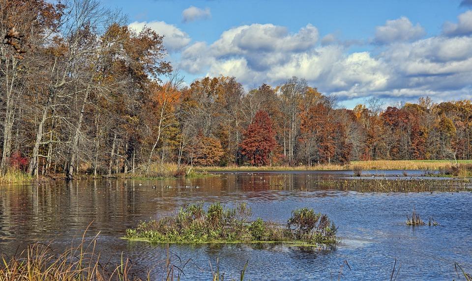 Great Swamp, Wildlife, Refuge, Water, Bird, Ducks
