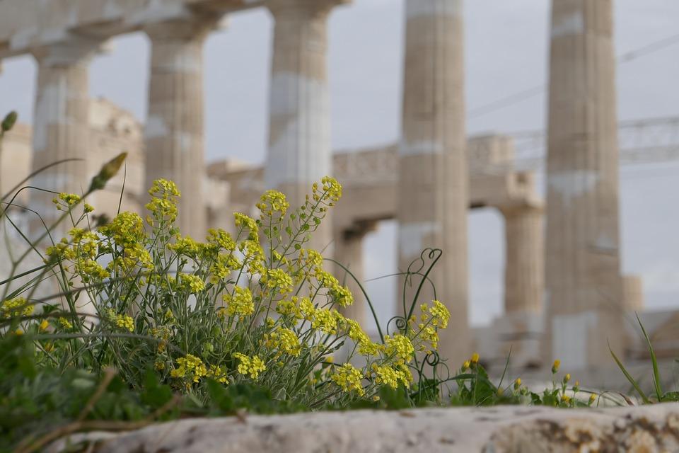 Flowers, Acropolis, Macro, Columnar, Athens, Greece