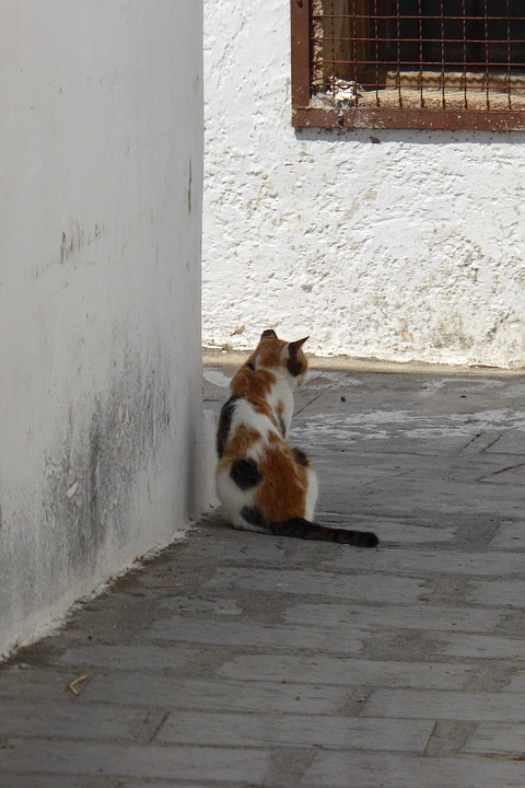 Greece, Cat, Village