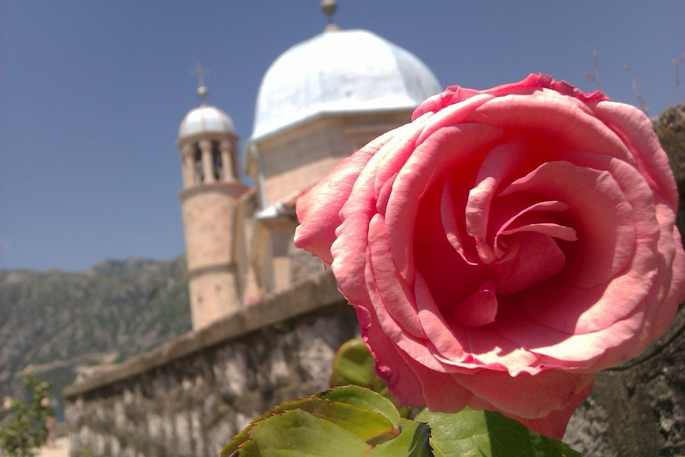 Greece, Church, Rose, Summer, Hot, Summer Flower