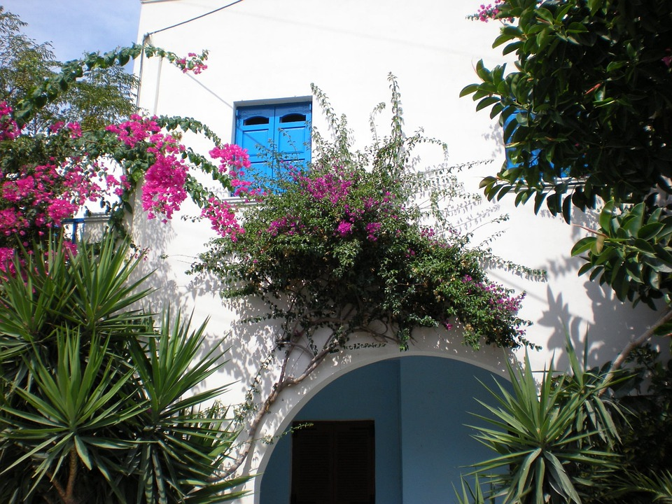 Santorini, Flowers, Greek Island, Greece, Street View