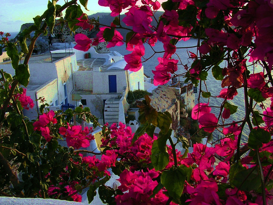 Santorini, Flowers, Greek Island