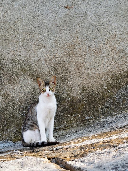 Greek Street Cat On Stone Stairs, Greek Islands