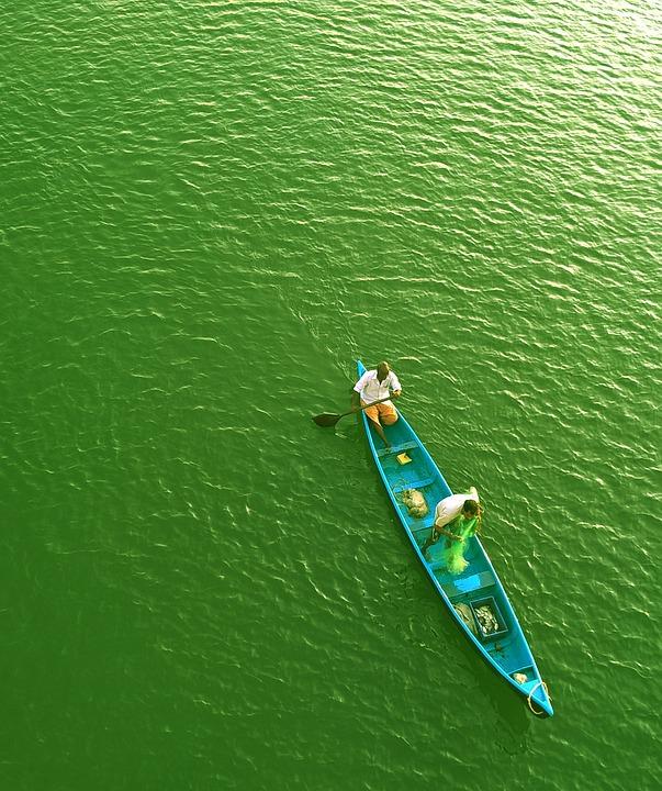 River, Fisherman, Green, Water, Fishing, Activity