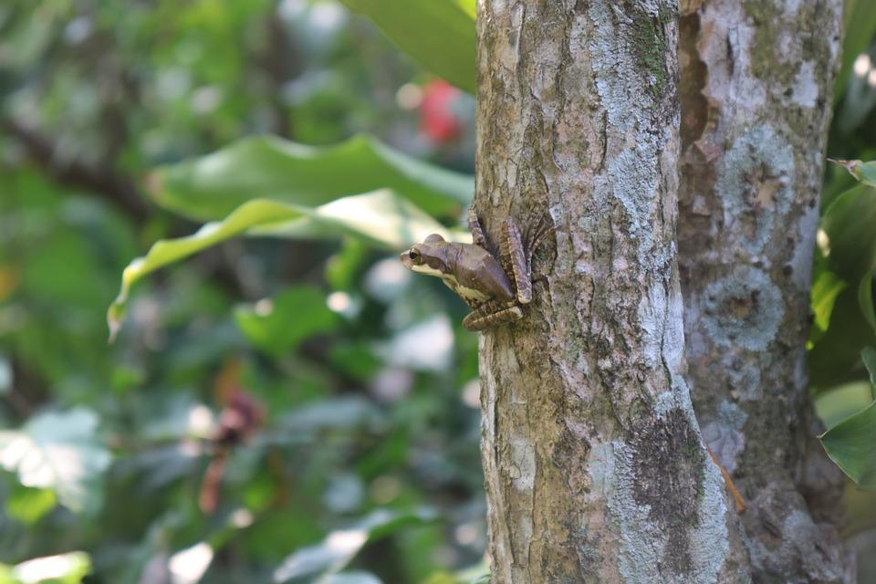 Frog, Tree, Green, Nature, Amphibians, Leaf, Wildlife