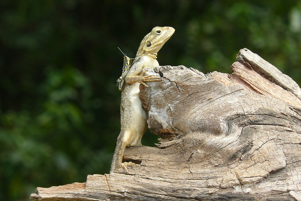Nature, Lizard, Grasshopper, Green, Animal, Environment