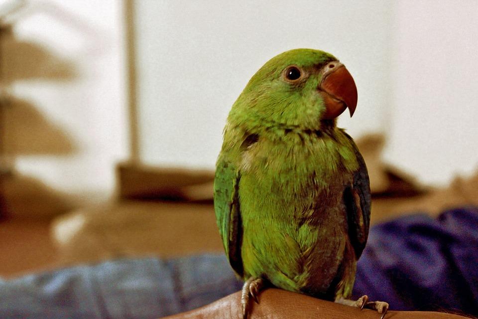 Emerald Kitty: 10 Amazing Green Animals - WebEcoist