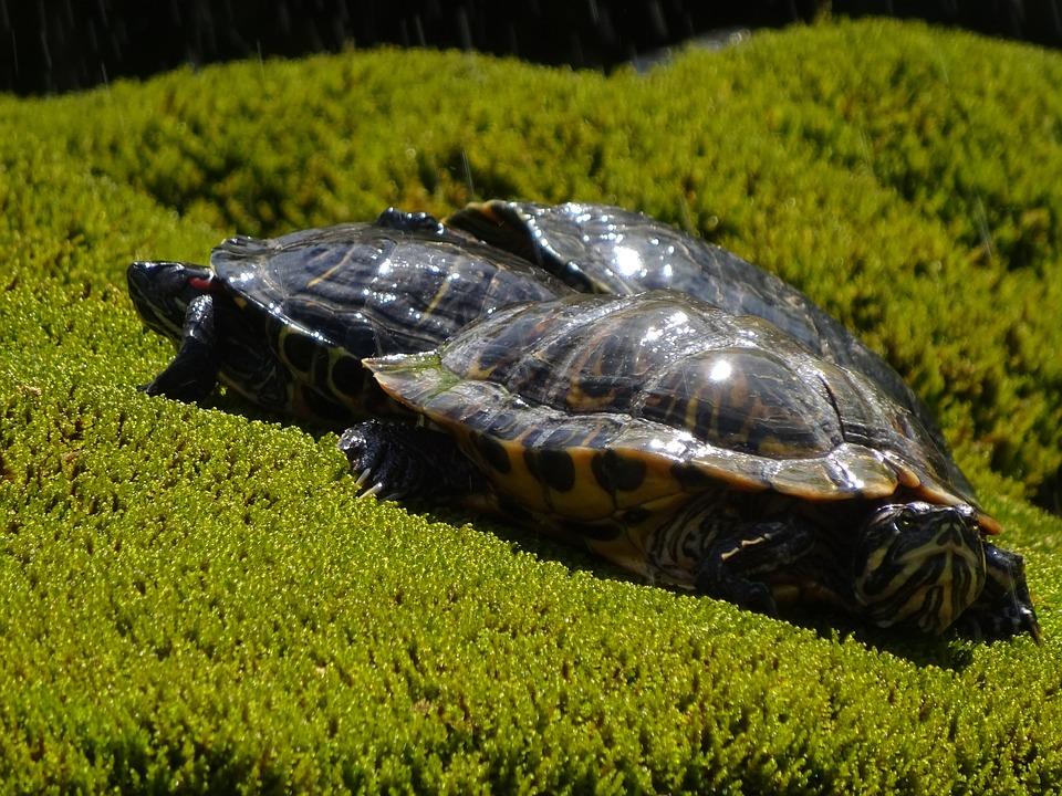Animals, Turtle, Green, Nature, Grass