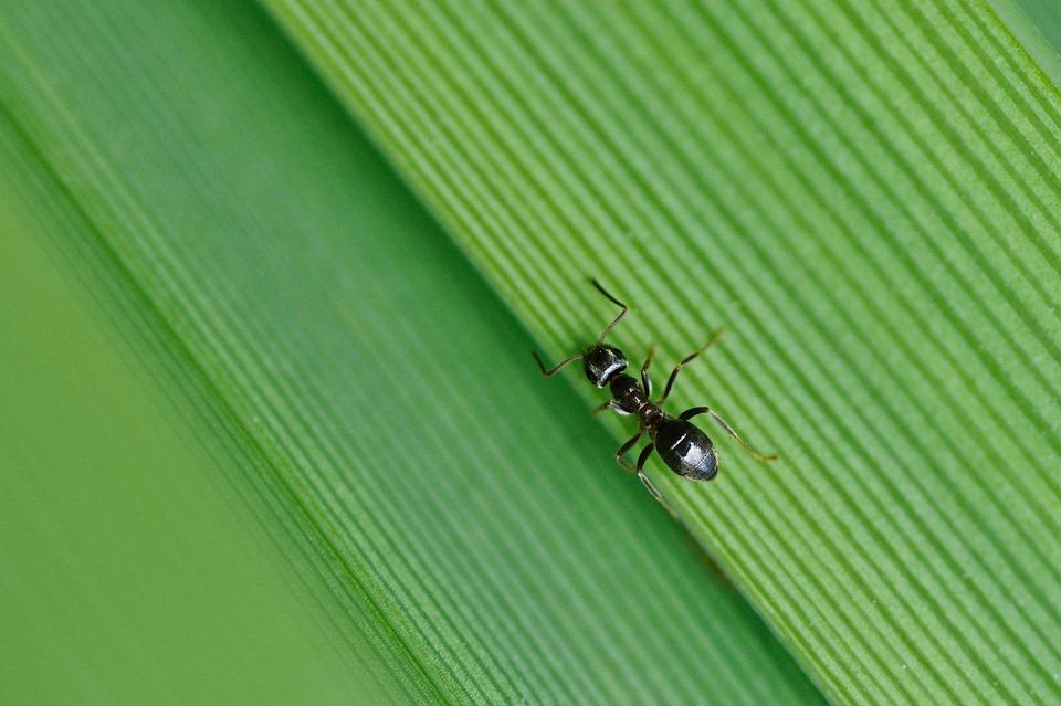 Ant, Insect, Green, Macro