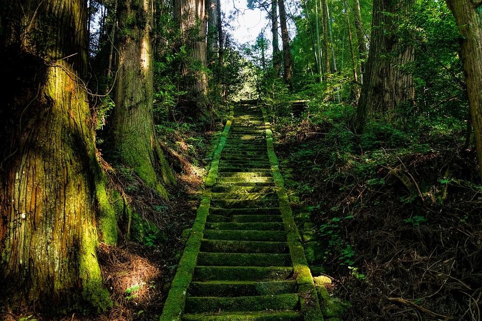 Japan, Aso, Shrine, Stairs, Moss, Green