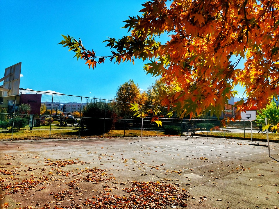 Autumn, Leaves, Dry Leaves, Landscape, Nature, Green