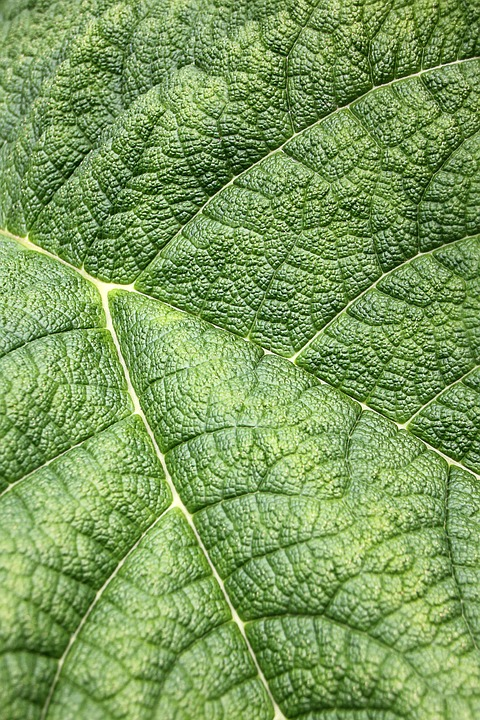 Leaf, Structure, Green, Texture, Nature, Background