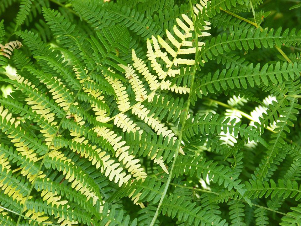 Ferns, Background, Texture, Leaves, Green