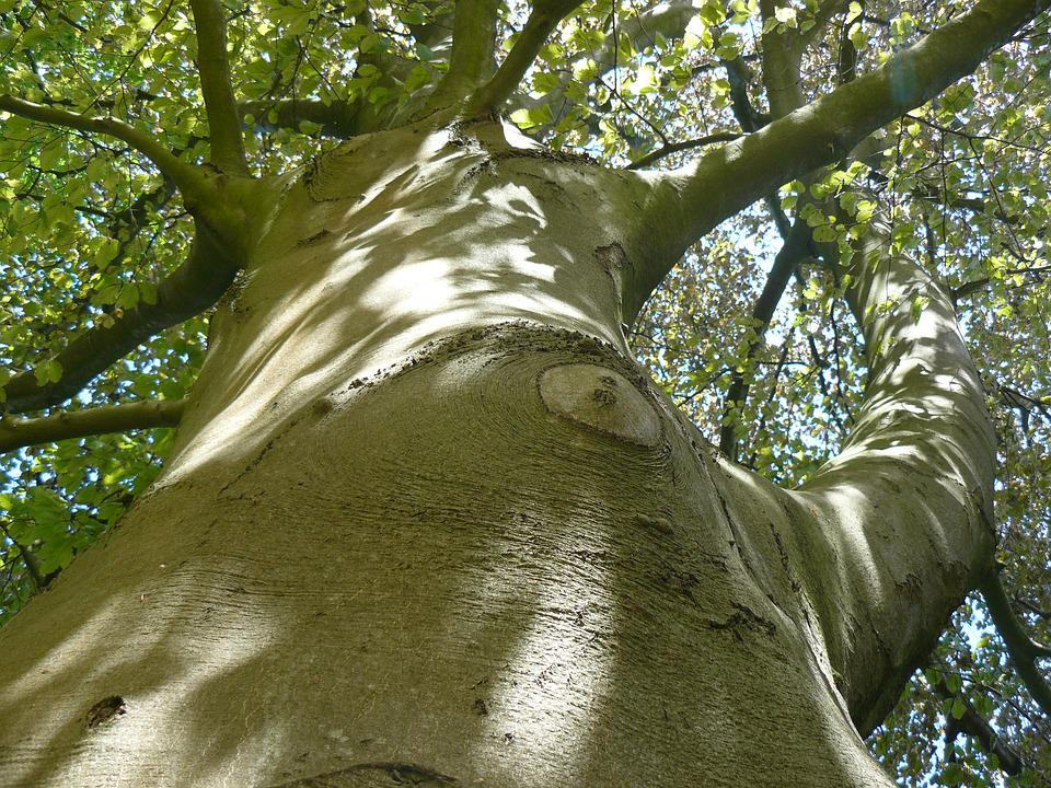 Tree, Crown, Green, Nature, Bark, Branches