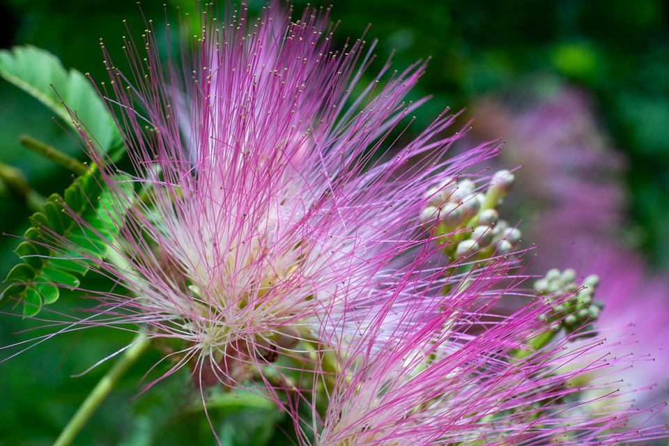 Green, Flower, Nature, Blossom, Summer, Spring, Plant