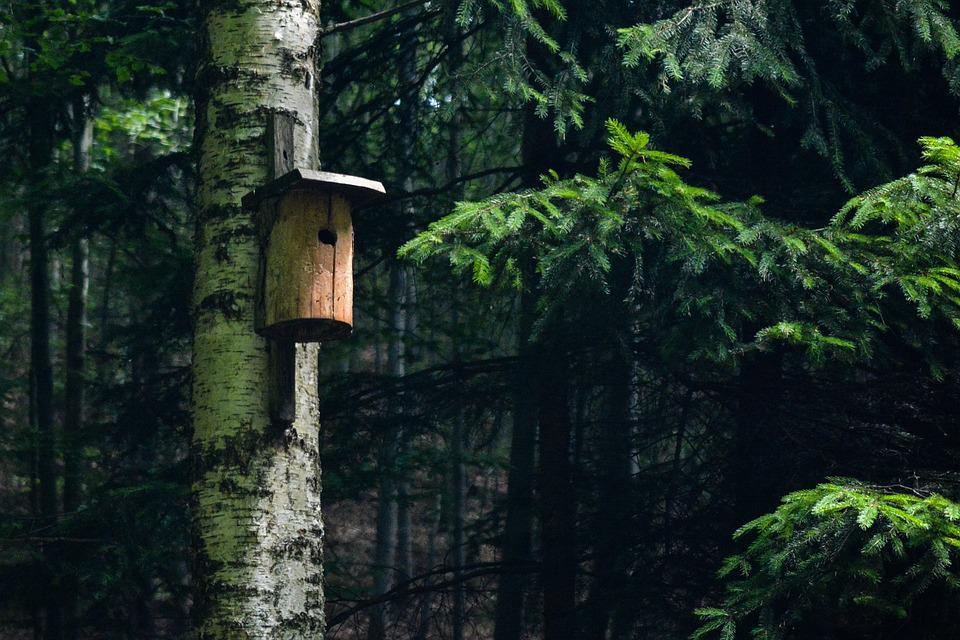 Forest, Booth, Birds, Green, Tree, Leaves, Nature