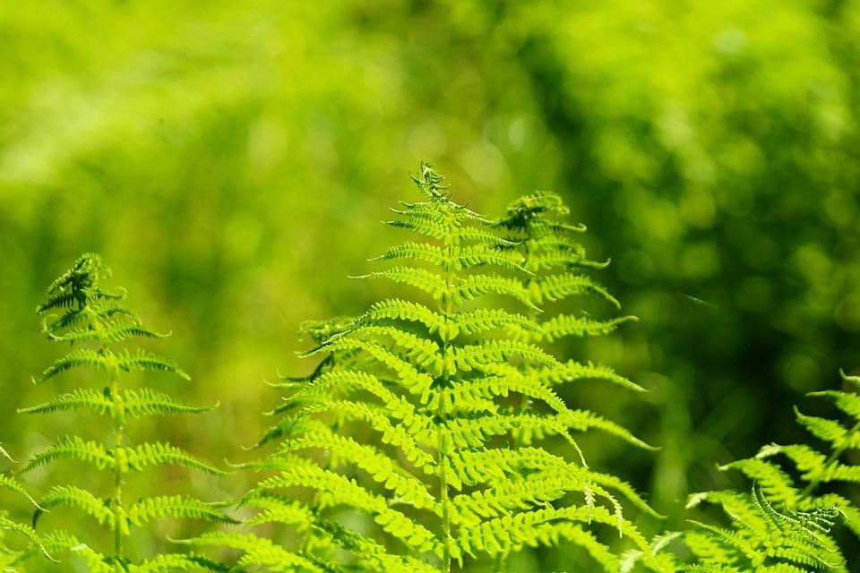 Foliage, Plant, Green, Botany