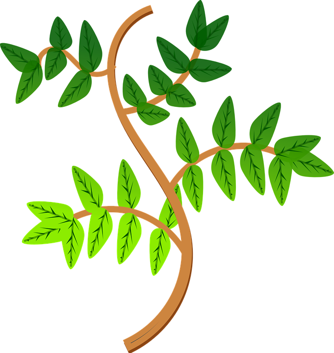 Leaves, Branch, Leaf, Green, Plant