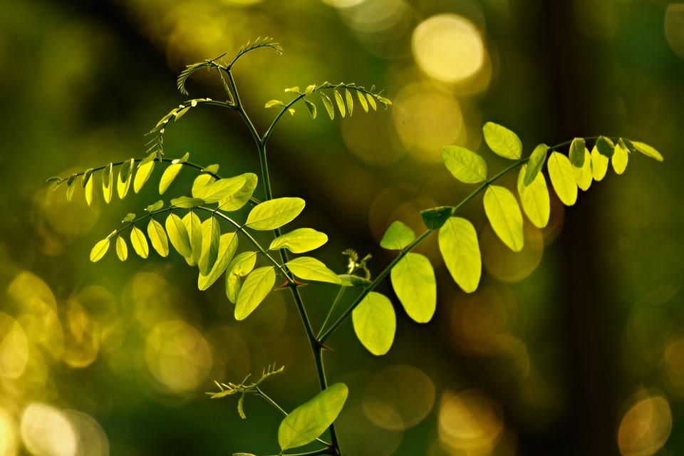 Leaves, Foliage, Twig, Branch, Shape, Green, Nature