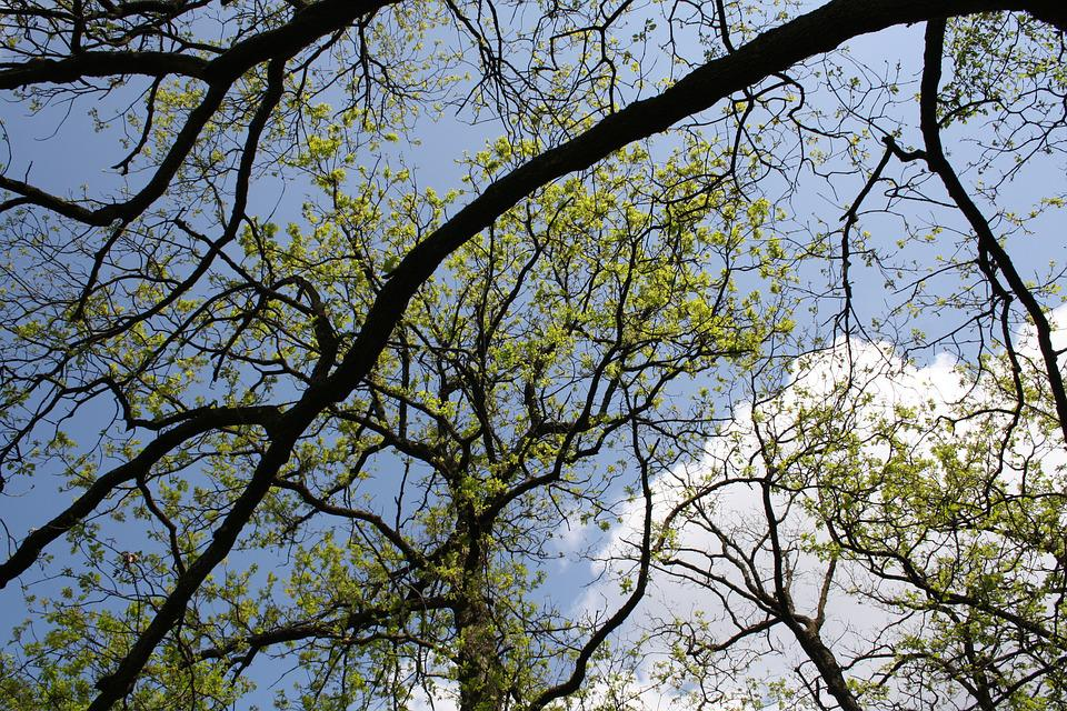 Tree, Branches, Nature, Branch, Sky, Plant, Green
