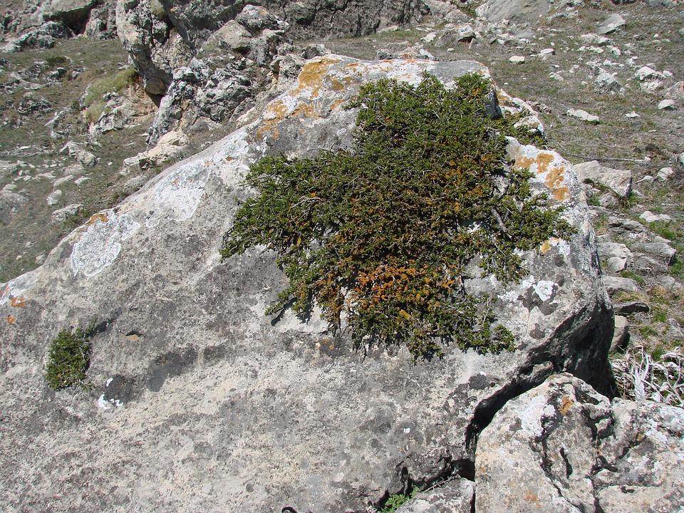 Stone, Greens, Green Bushes
