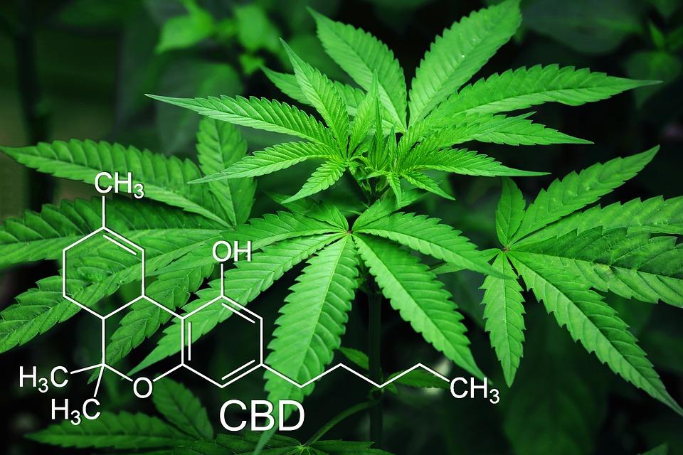 Marijuana, Leaves, Cannabis, Green, Natural, Narcotic