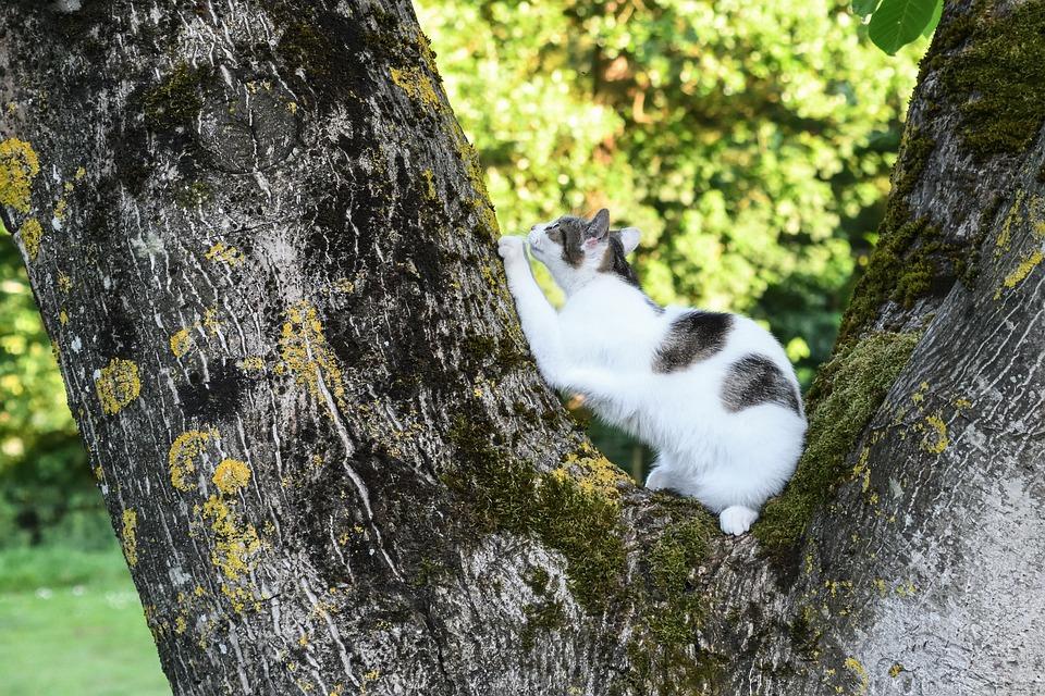 Cat, Tree, Scratch, Green