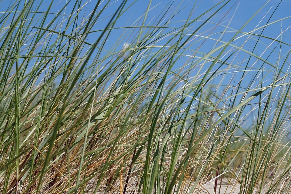 Beach, Green, Coast, Holiday