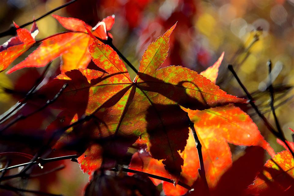 Leaf, Foliage, Autumn, Colorful, Red, Green, Light