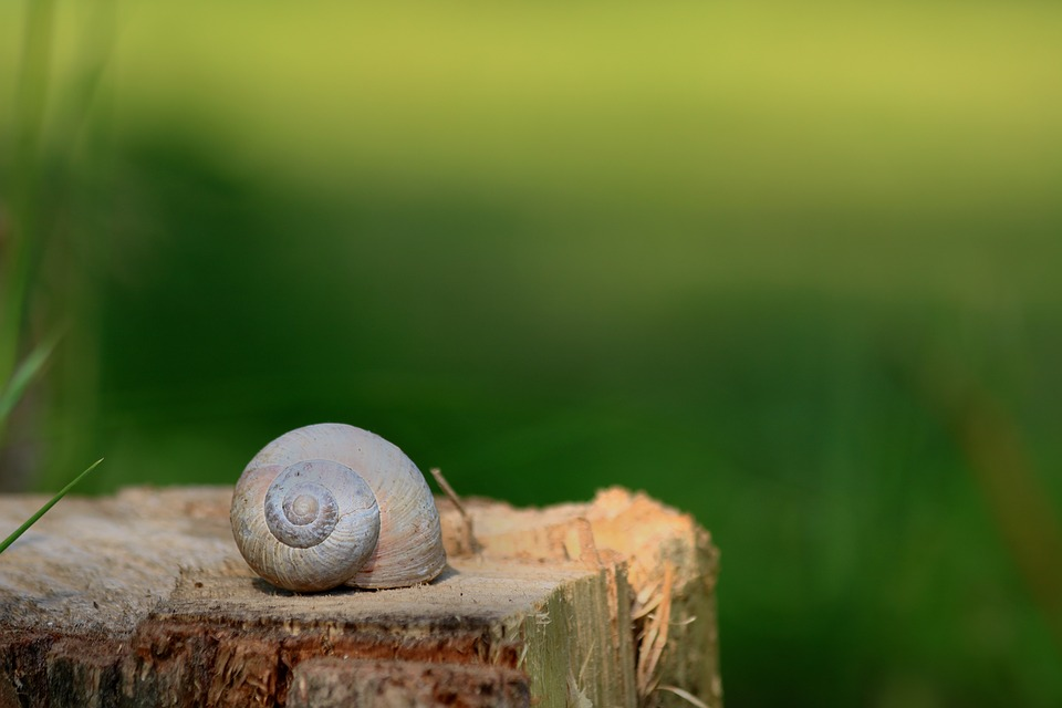 Worm, Conch, Blurred Background, Green, Nature, Summer