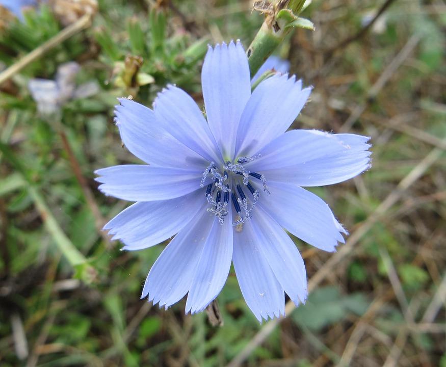 Flower, Nature, Croatia, Green