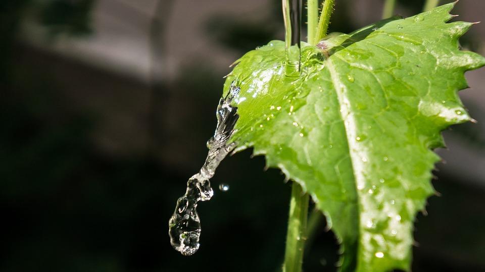 Leaf, Water, Nature, Green, Crystalline, Natural