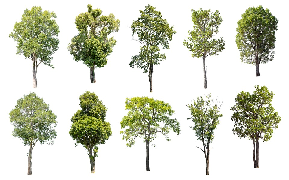 Tree, Isolated, Nature, Green, Summer, Deciduous Trees