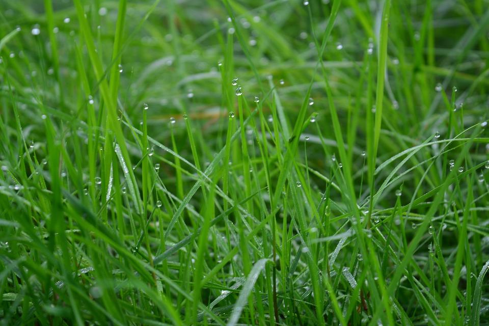 Grass, Green, Dew, Dewdrops, Morning, Green Grass