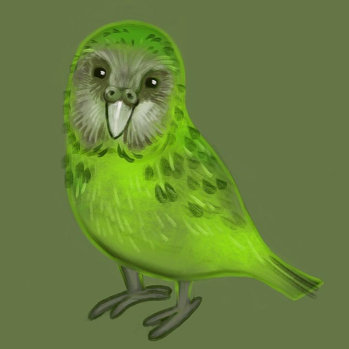 Bird, Kakapo, Parrot, Drawing, Painting, Green, Cute