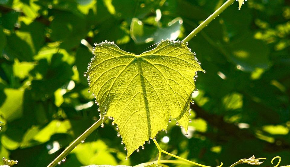 Leaf, Rosa, Nature, Plant, Macro, Green, Drops, Wet