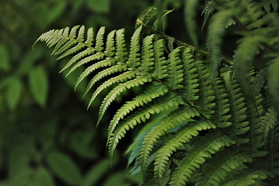 Grow, Green, Fern, Flora, Growth, Plant, Leaf, Eco