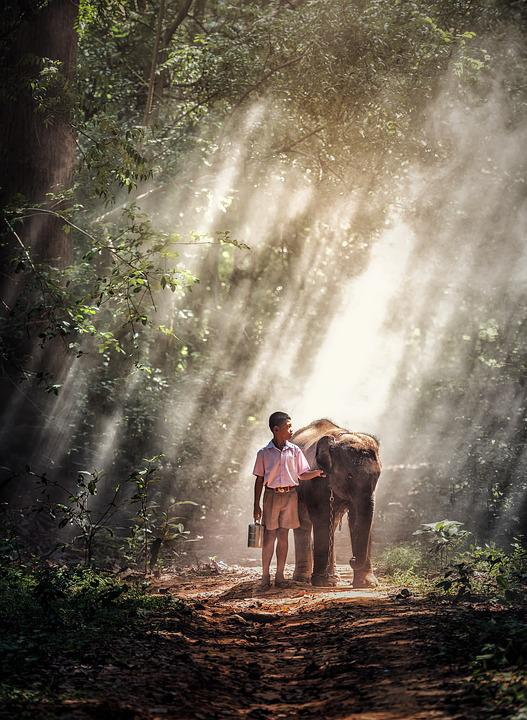 Elephant, Boy, Kid, Animals, Asia, Green, Mammal