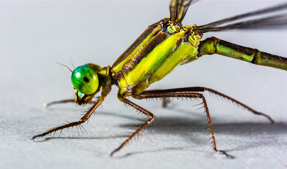 Dragonfly, Insect, Close, Eye, Green, Compound, Legs