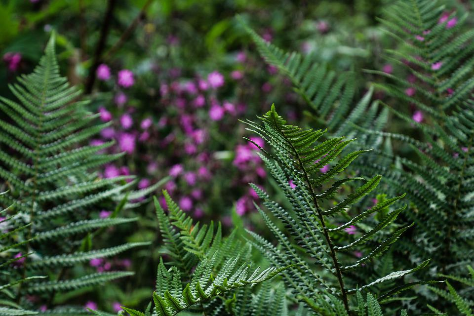 Fern, Nature, Green, Plant, Leaf, Growth, Flora